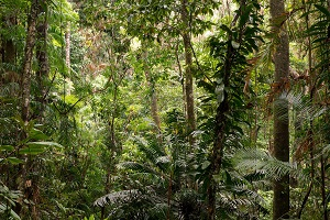 Daintree Forest Tour