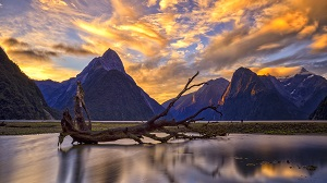 Fiordland National Park Tour