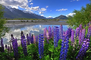 Mount Cook Touring