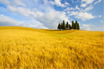 GEMS OF UMBRIA AND TUSCANY by Globus Tours